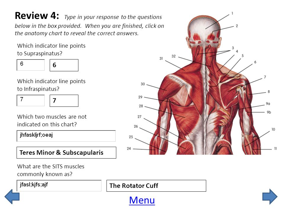 Review 4: Type in your response to the questions below in the box provided. When you are finished, click on the anatomy chart to reveal the correct answers.