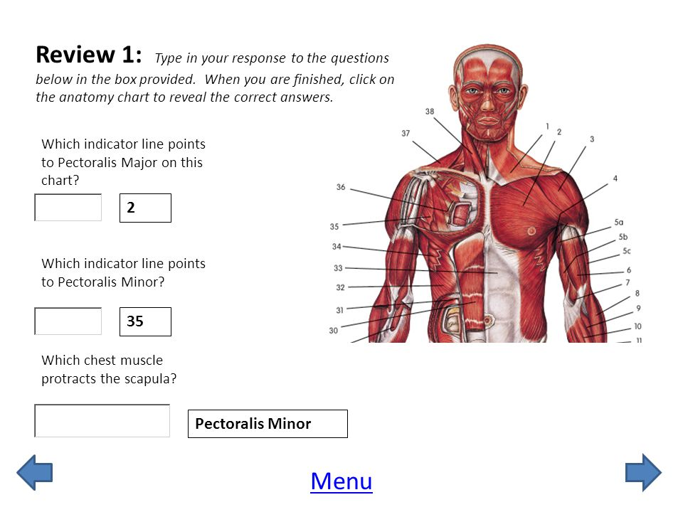 Review 1: Type in your response to the questions below in the box provided. When you are finished, click on the anatomy chart to reveal the correct answers.