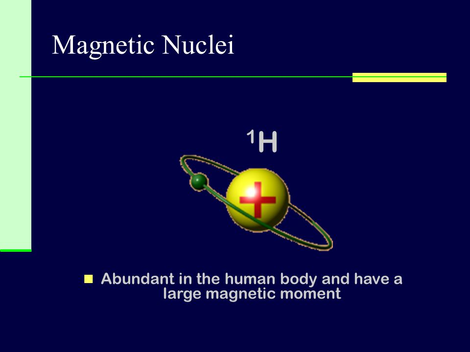 Abundant in the human body and have a large magnetic moment