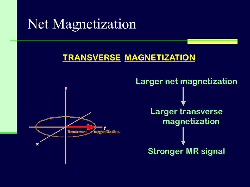Net Magnetization TRANSVERSE MAGNETIZATION Larger net magnetization