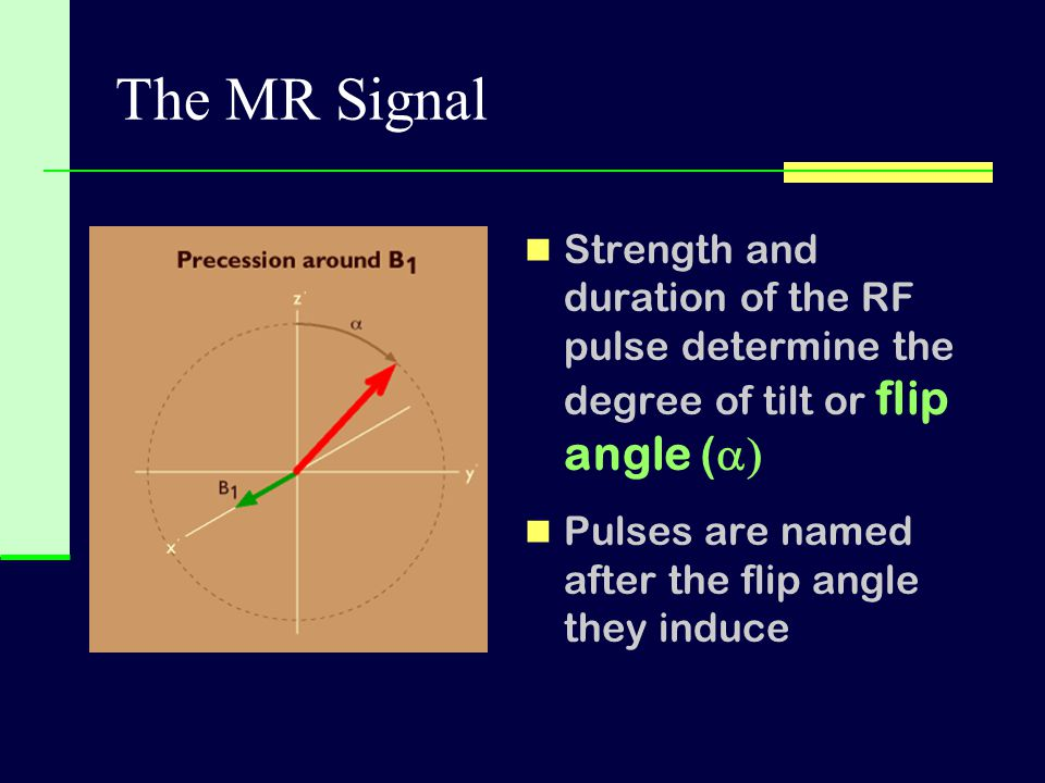The MR Signal Strength and duration of the RF pulse determine the degree of tilt or flip angle (a) Pulses are named after the flip angle they induce.