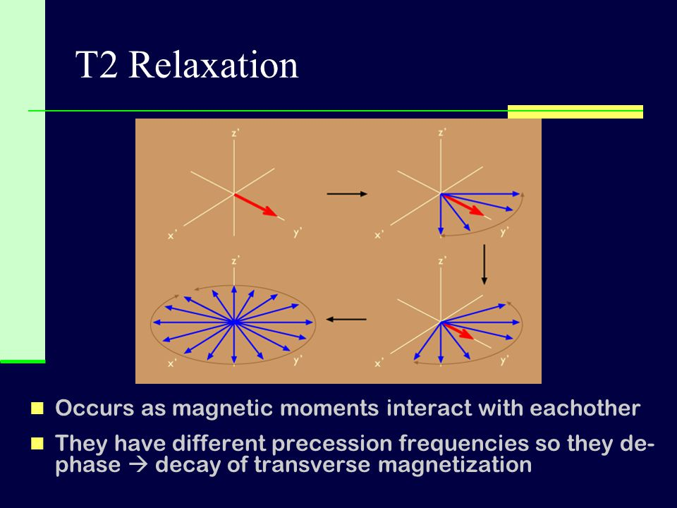 T2 Relaxation Occurs as magnetic moments interact with eachother