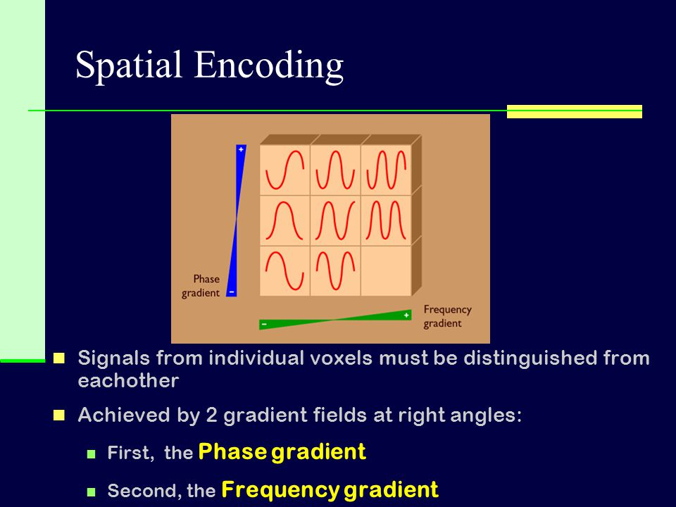 Spatial Encoding Signals from individual voxels must be distinguished from eachother. Achieved by 2 gradient fields at right angles: