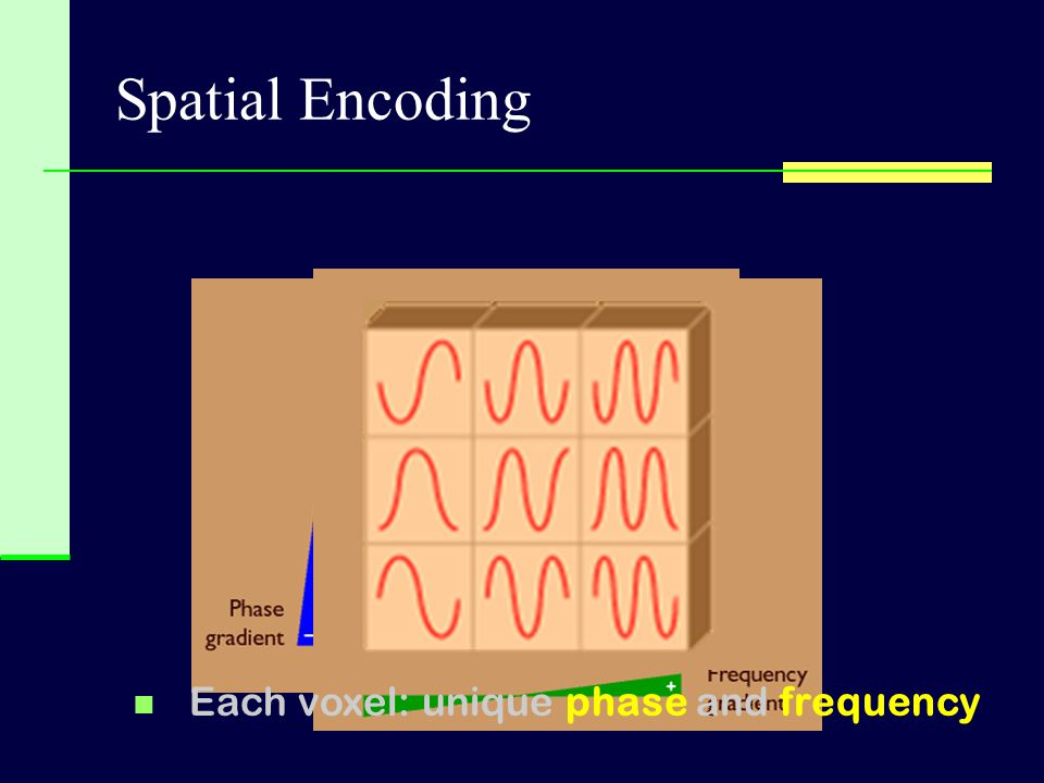 Spatial Encoding Each voxel: unique phase and frequency