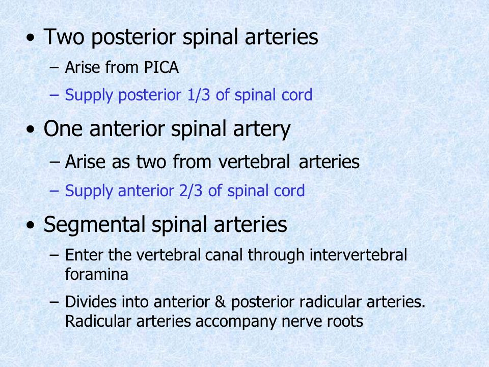 Two posterior spinal arteries