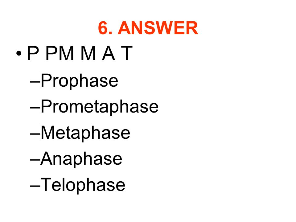 P PM M A T 6. ANSWER Prophase Prometaphase Metaphase Anaphase