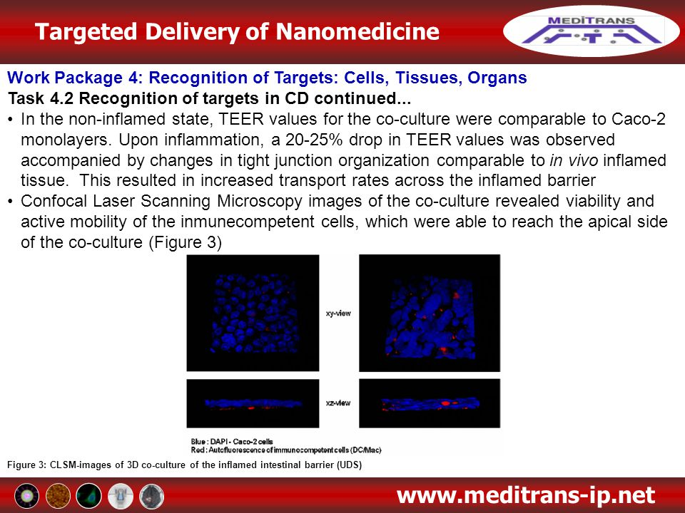 Work Package 4: Recognition of Targets: Cells, Tissues, Organs