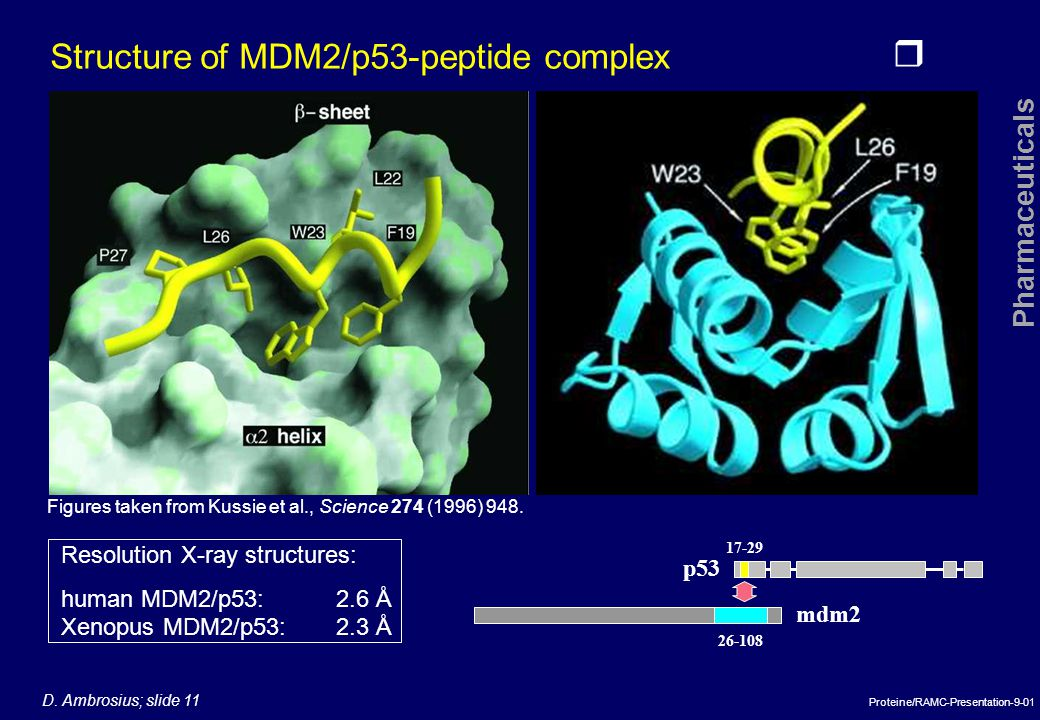 Structure of MDM2/p53-peptide complex