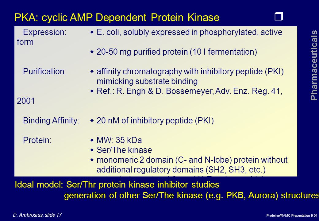 PKA: cyclic AMP Dependent Protein Kinase