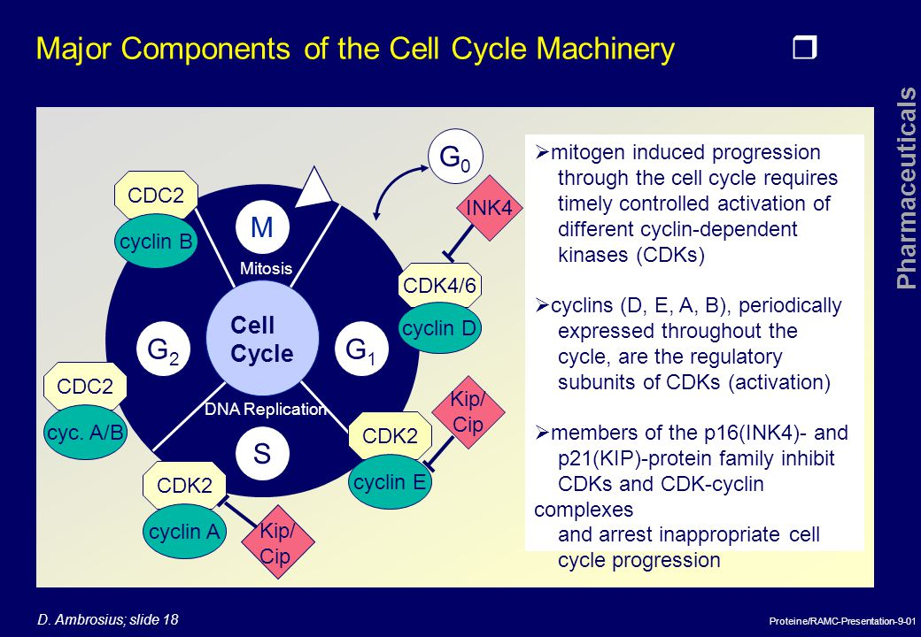 Major Components of the Cell Cycle Machinery