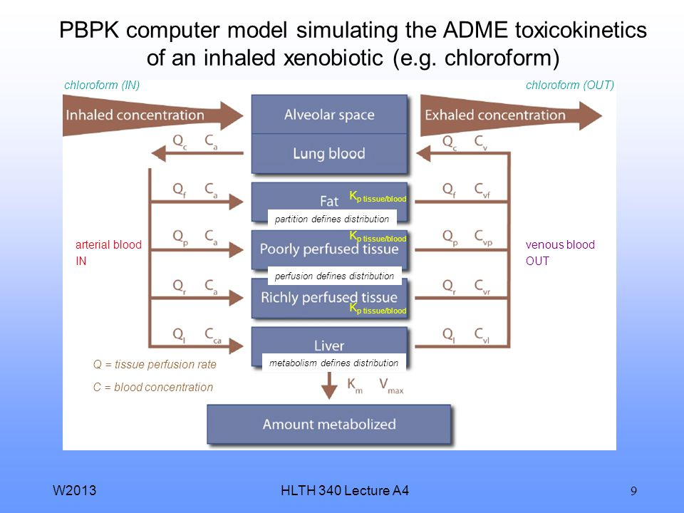 PBPK computer model simulating the ADME toxicokinetics of an inhaled xenobiotic (e.g. chloroform)