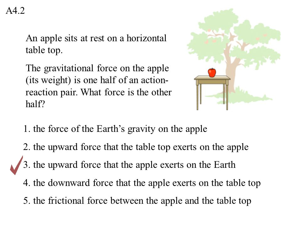 A4.2 An apple sits at rest on a horizontal table top.