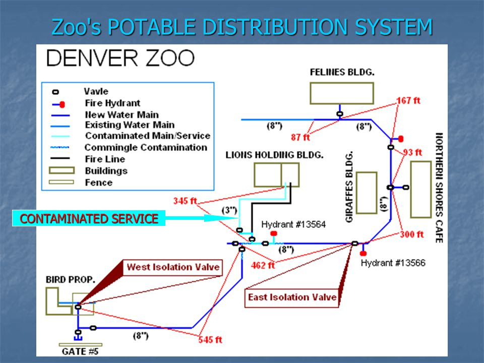 Zoo s POTABLE DISTRIBUTION SYSTEM