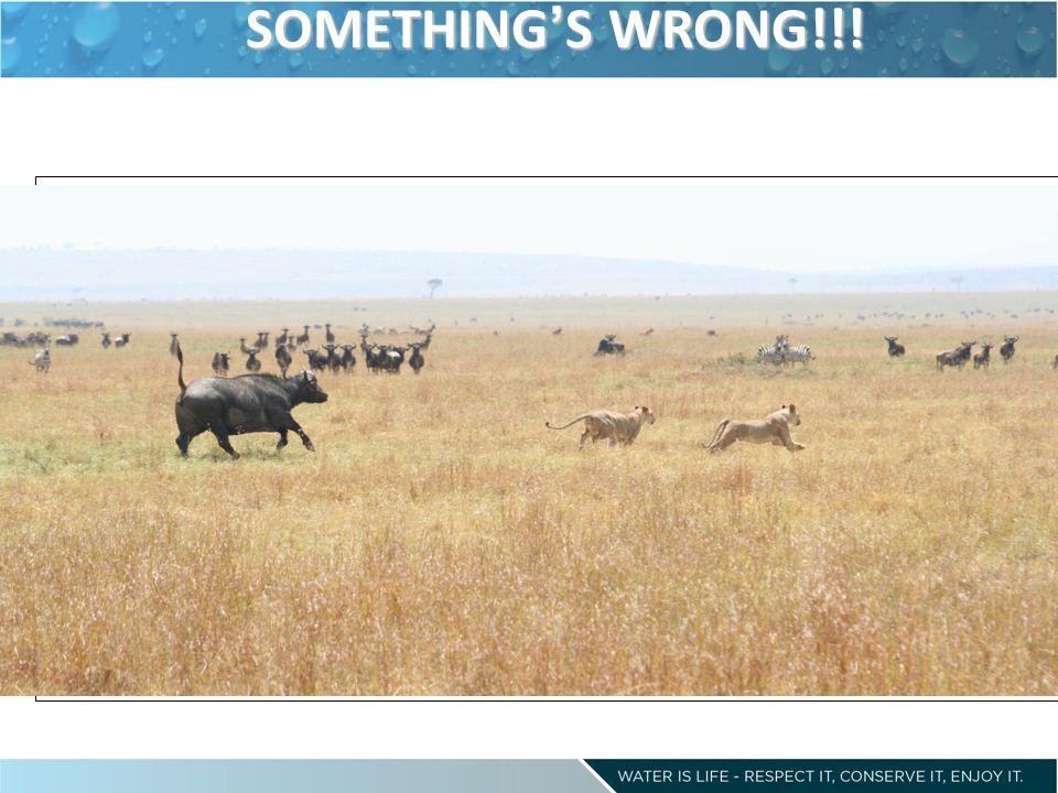 SOMETHING'S WRONG!!!