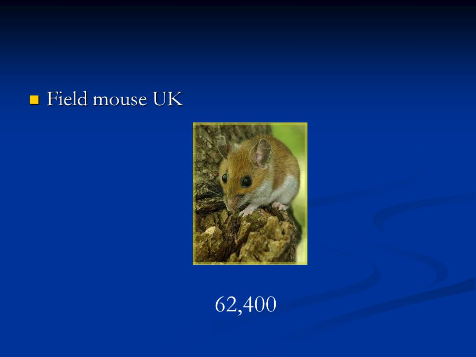Field mouse UK 62,400