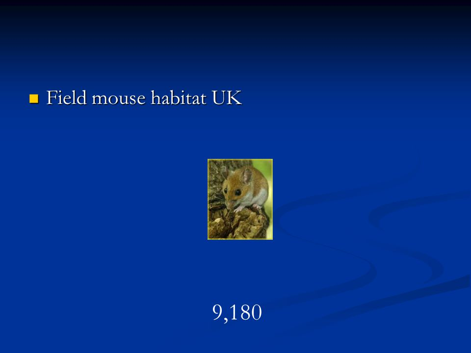 Field mouse habitat UK 9,180