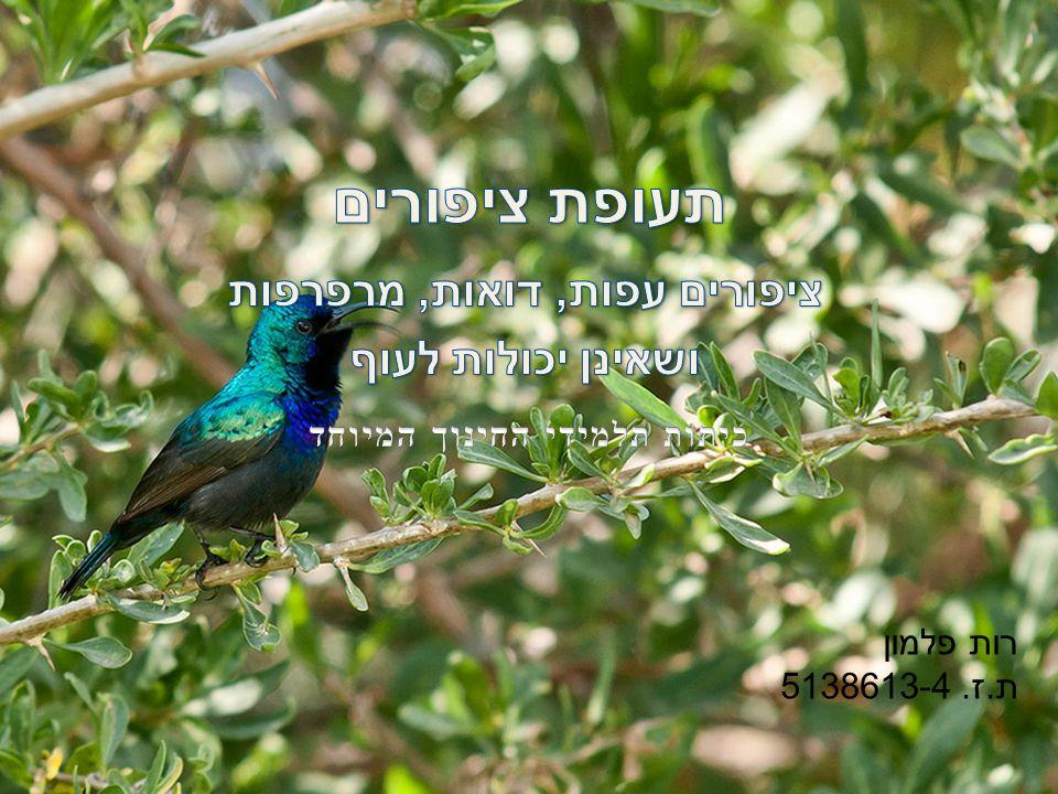 ציפורים עפות, דואות, מרפרפות ושאינן יכולות לעוף