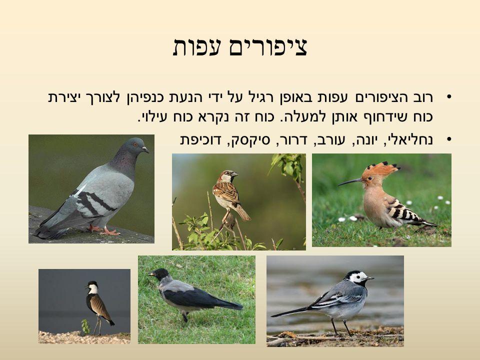 ציפורים עפות רוב הציפורים עפות באופן רגיל על ידי הנעת כנפיהן לצורך יצירת כוח שידחוף אותן למעלה. כוח זה נקרא כוח עילוי.
