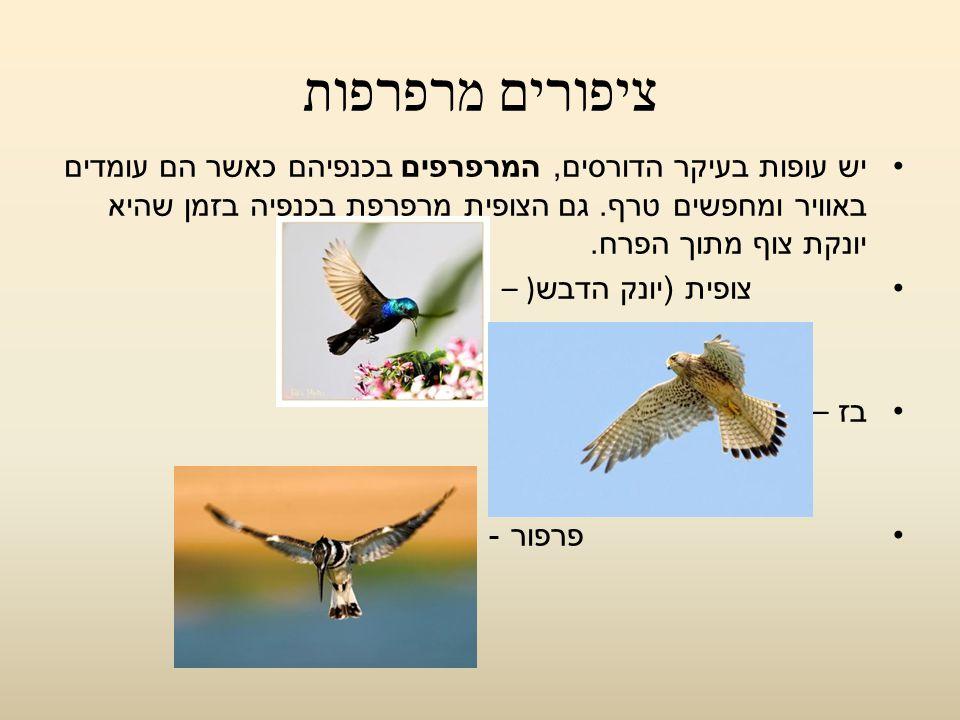 ציפורים מרפרפות יש עופות בעיקר הדורסים, המרפרפים בכנפיהם כאשר הם עומדים באוויר ומחפשים טרף. גם הצופית מרפרפת בכנפיה בזמן שהיא יונקת צוף מתוך הפרח.