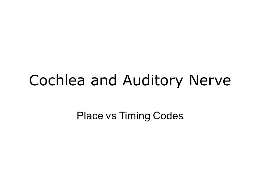 Cochlea and Auditory Nerve