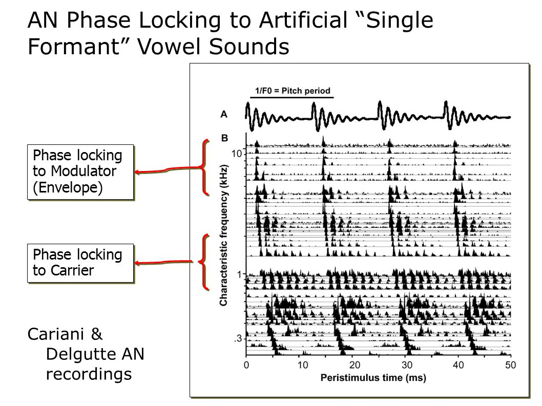 AN Phase Locking to Artificial Single Formant Vowel Sounds