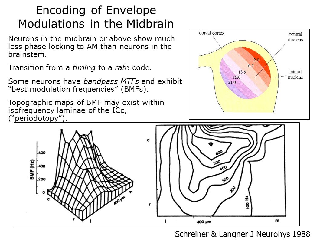 Encoding of Envelope Modulations in the Midbrain