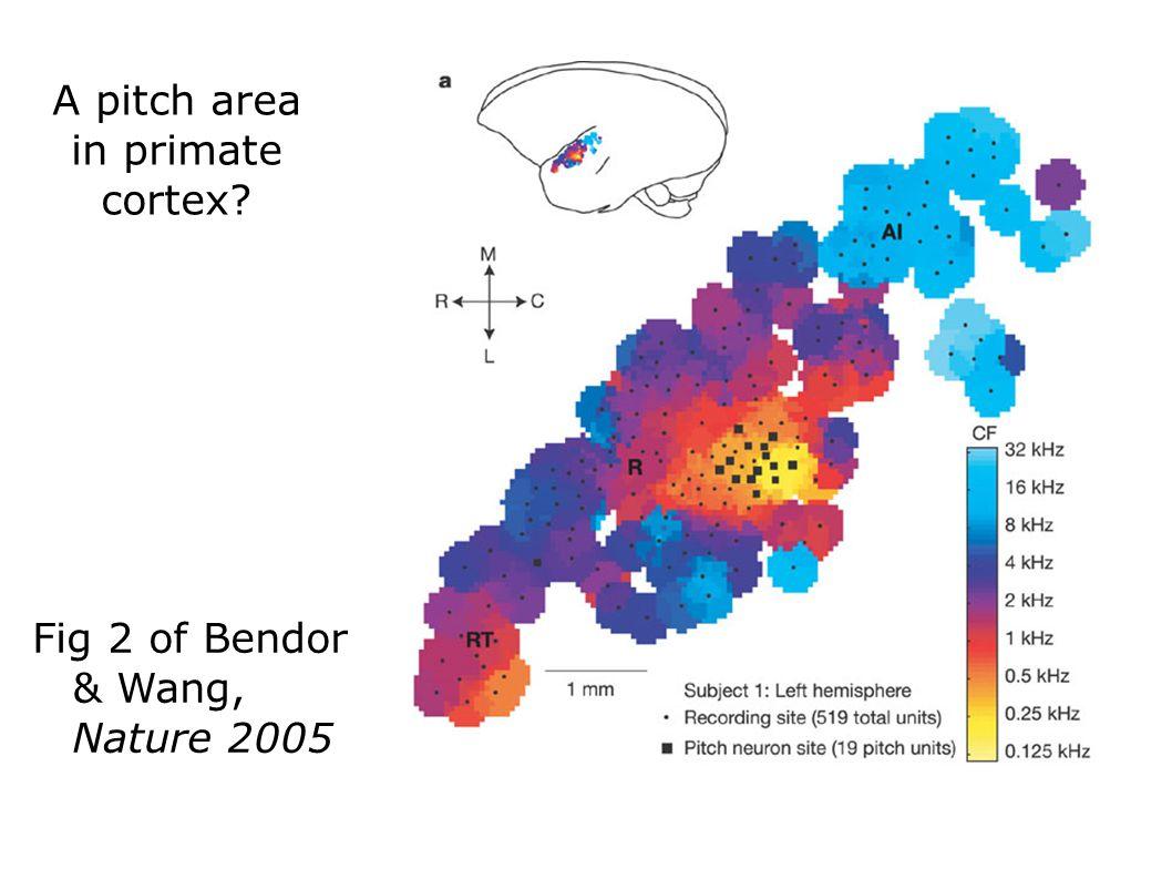 A pitch area in primate cortex