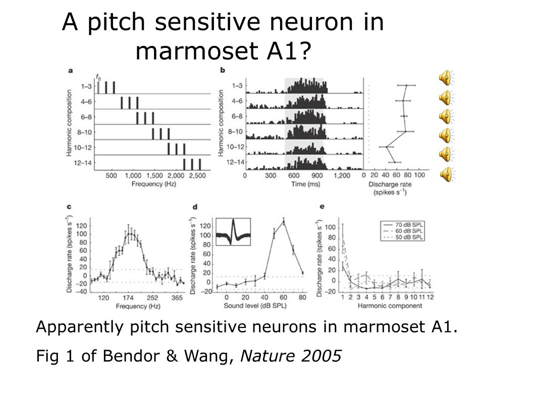 A pitch sensitive neuron in marmoset A1