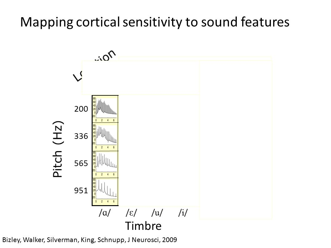 Mapping cortical sensitivity to sound features