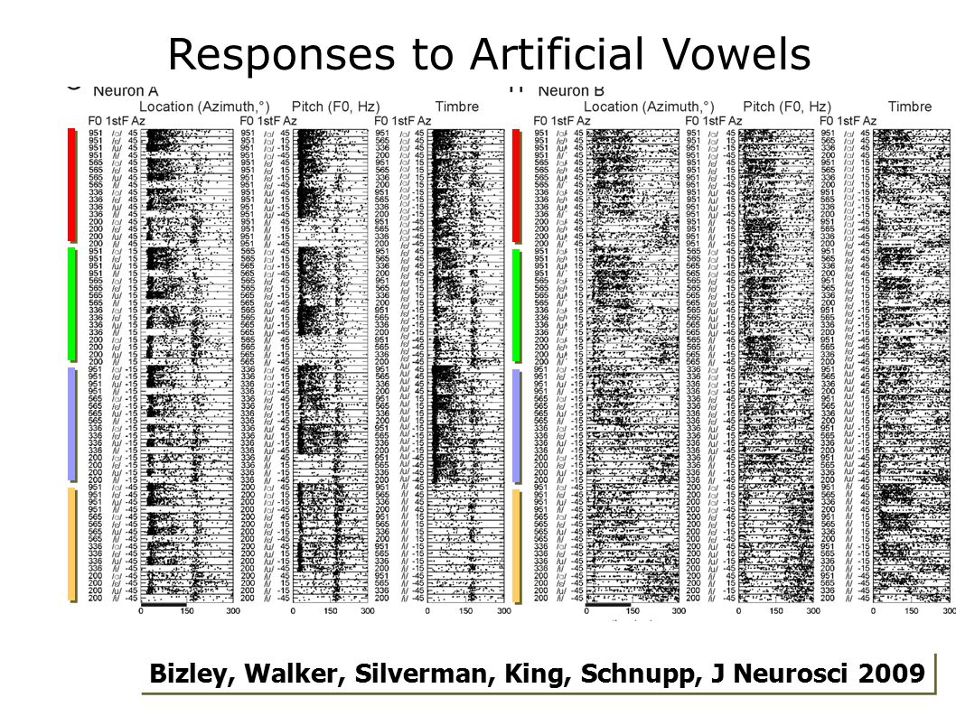 Responses to Artificial Vowels