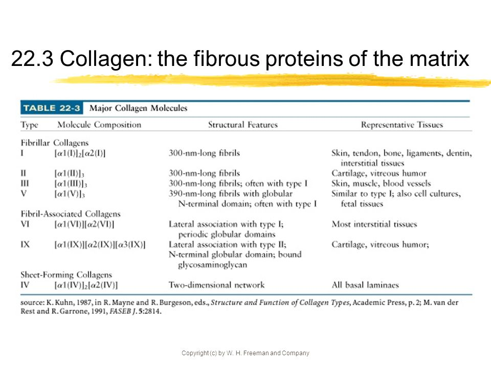 22.3 Collagen: the fibrous proteins of the matrix