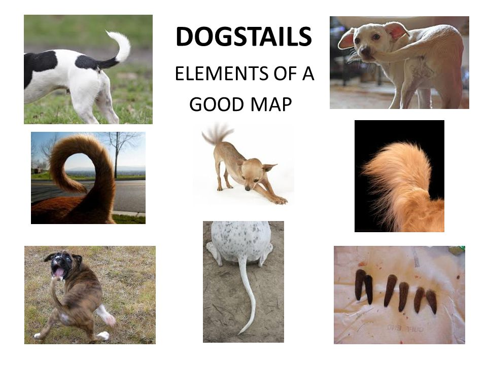 DOGSTAILS ELEMENTS OF A GOOD MAP