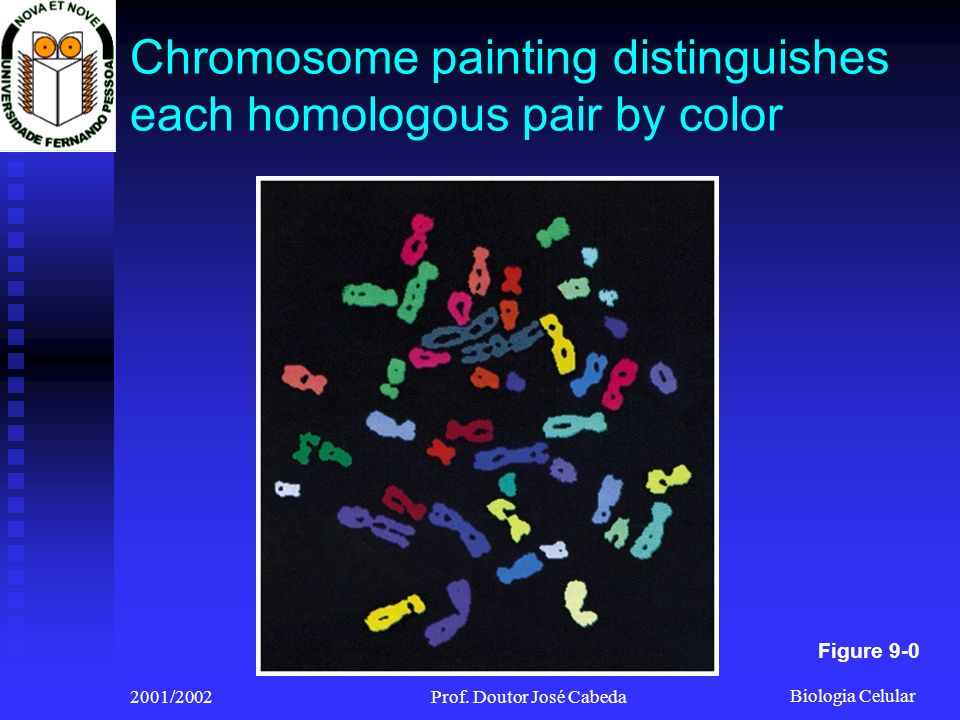 Chromosome painting distinguishes each homologous pair by color