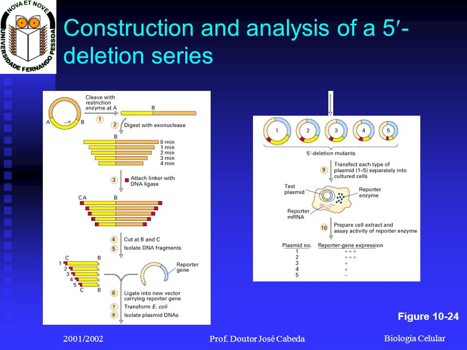 Construction and analysis of a 5-deletion series