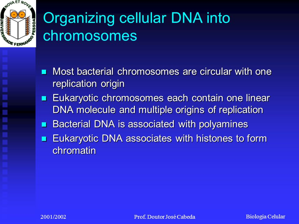 Organizing cellular DNA into chromosomes