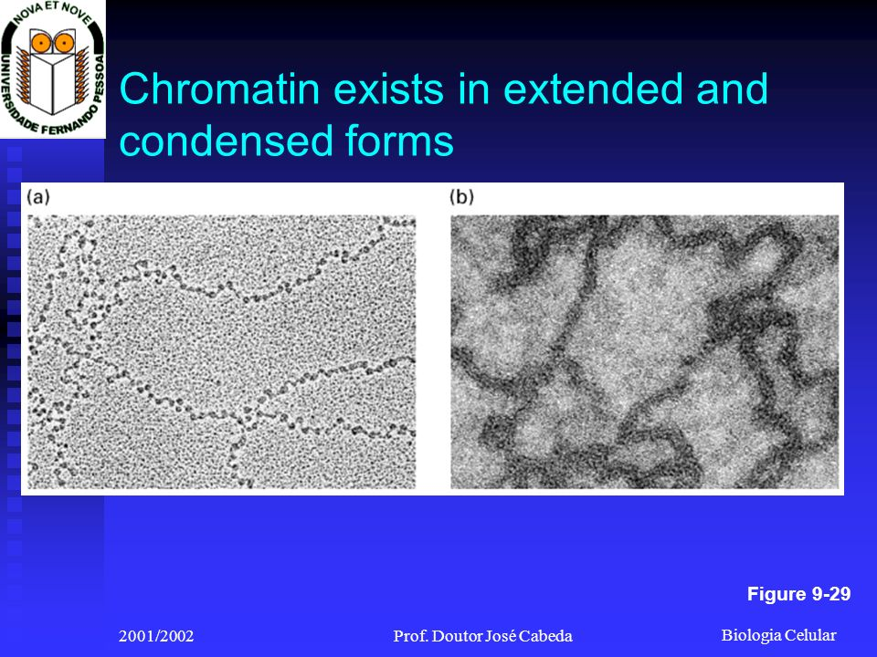 Chromatin exists in extended and condensed forms