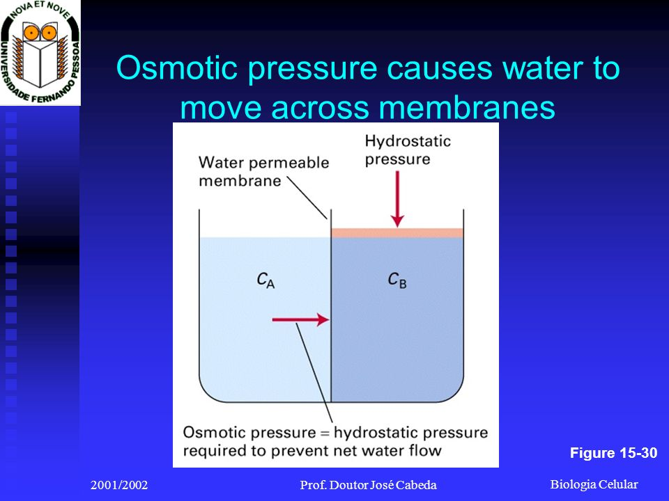 Osmotic pressure causes water to move across membranes