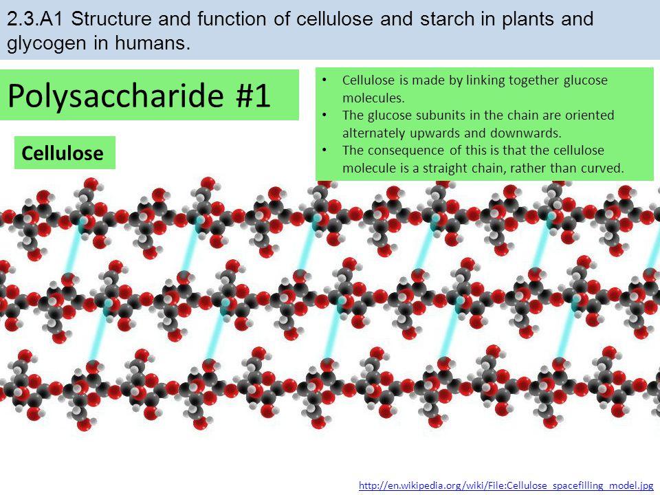 Polysaccharide #1 Cellulose