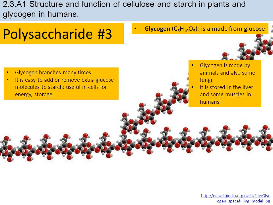 2.3.A1 Structure and function of cellulose and starch in plants and glycogen in humans.