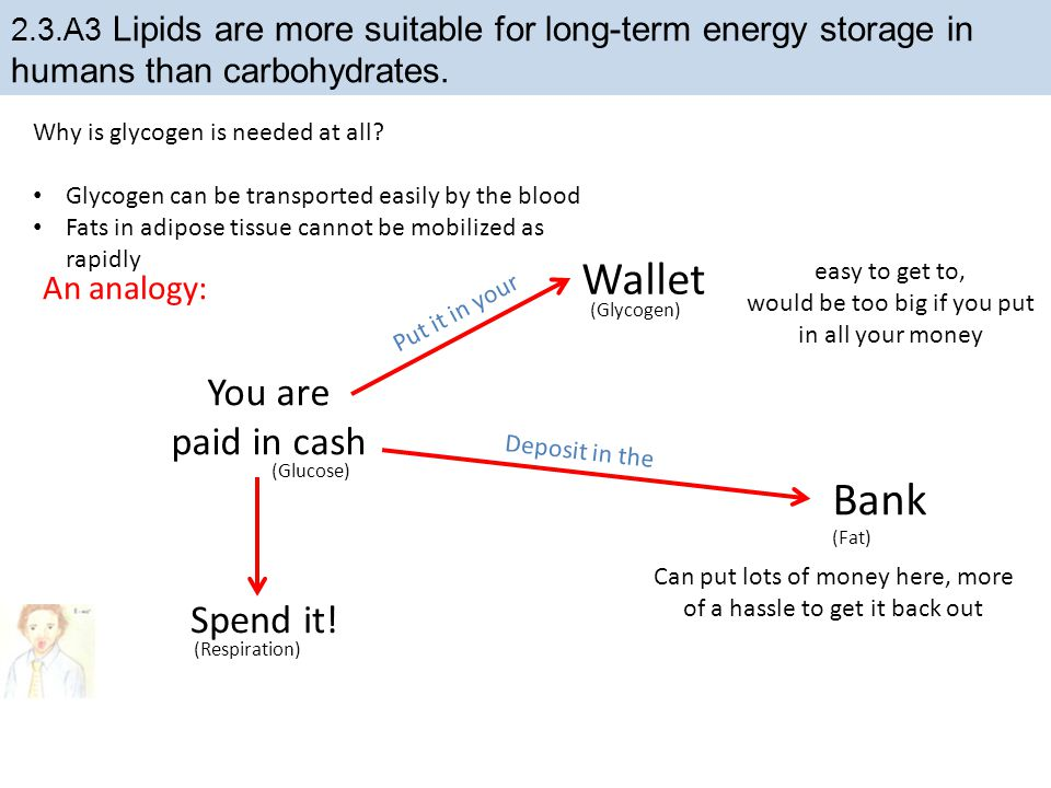 Wallet Bank You are paid in cash Spend it! An analogy: