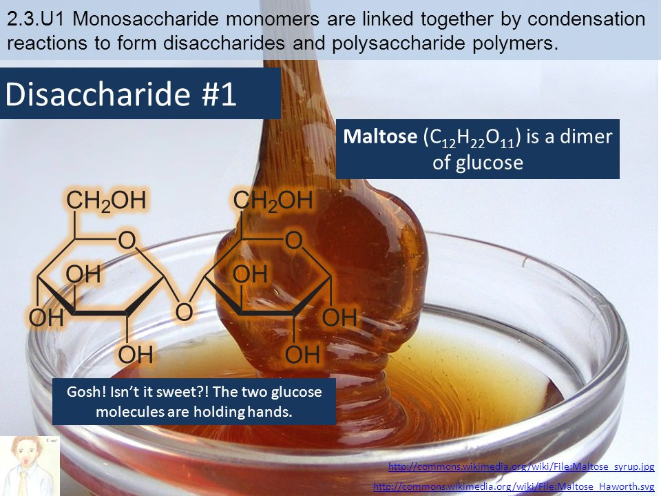Disaccharide #1 Maltose (C12H22O11) is a dimer of glucose