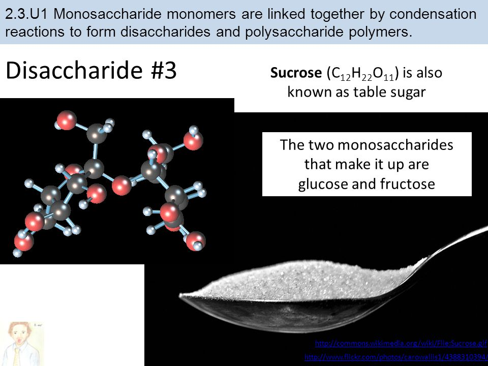Disaccharide #3 Sucrose (C12H22O11) is also known as table sugar