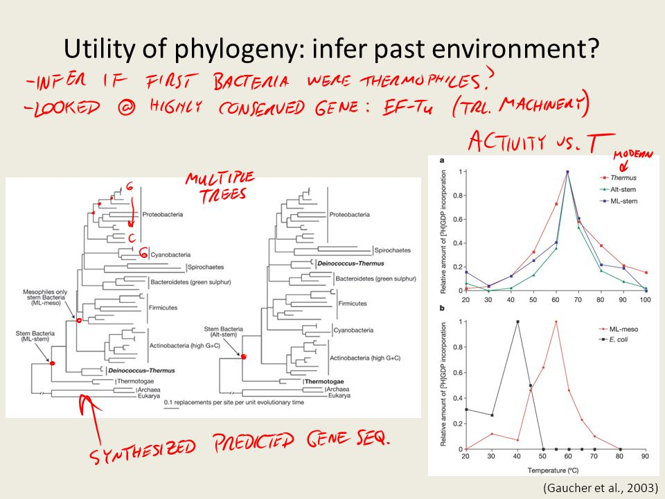Utility of phylogeny: infer past environment
