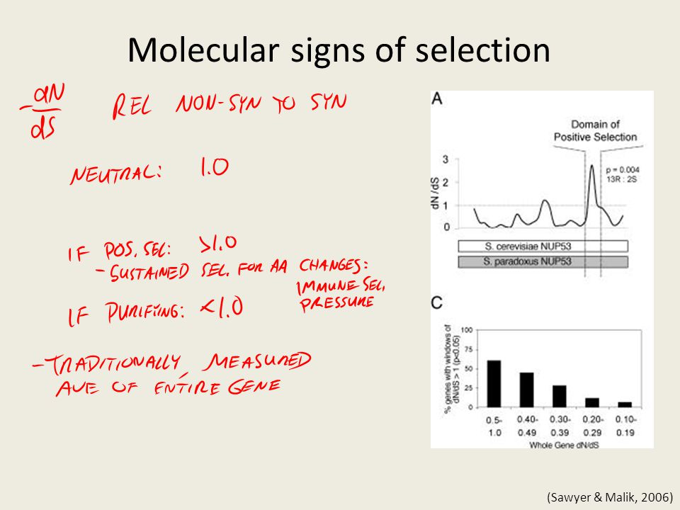 Molecular signs of selection