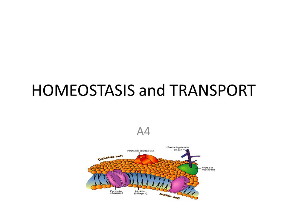 HOMEOSTASIS and TRANSPORT