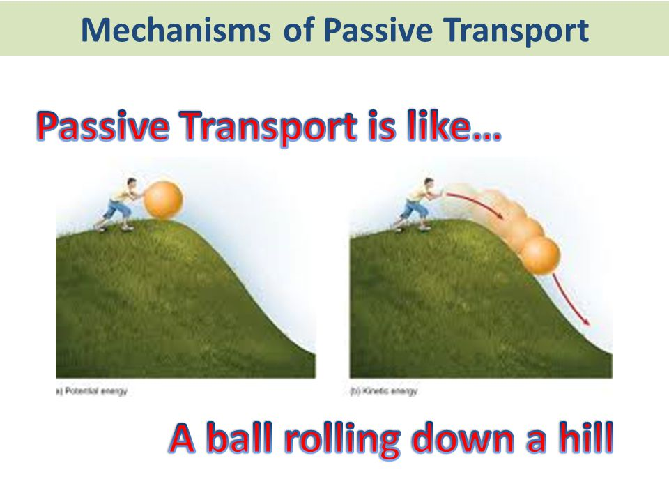 Mechanisms of Passive Transport