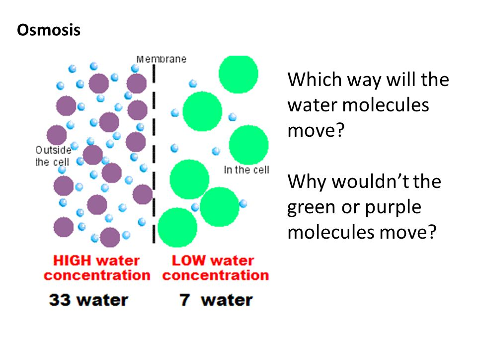 Which way will the water molecules move