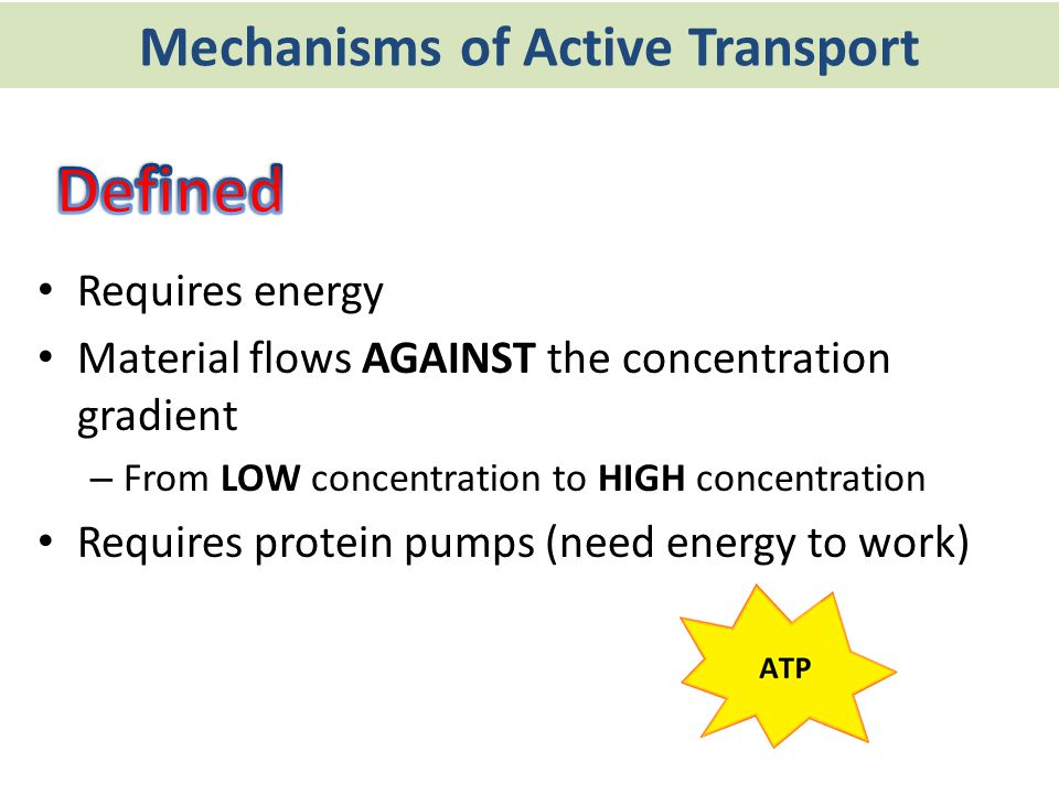 Mechanisms of Active Transport