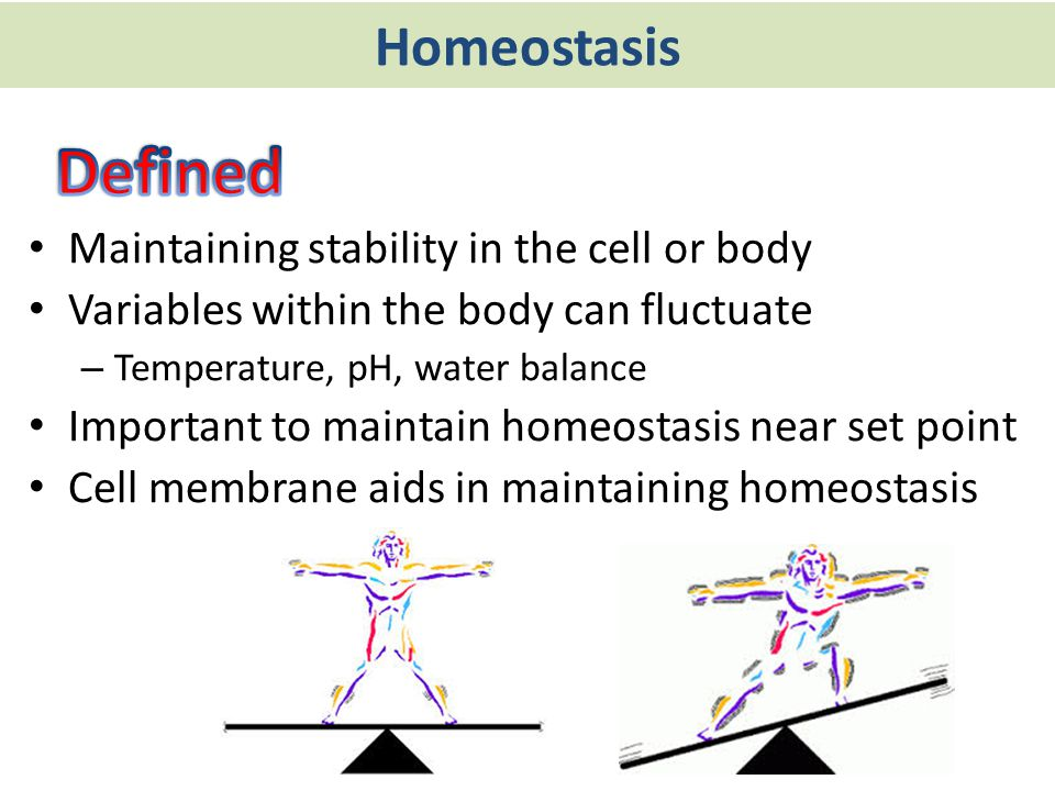 Defined Homeostasis Maintaining stability in the cell or body