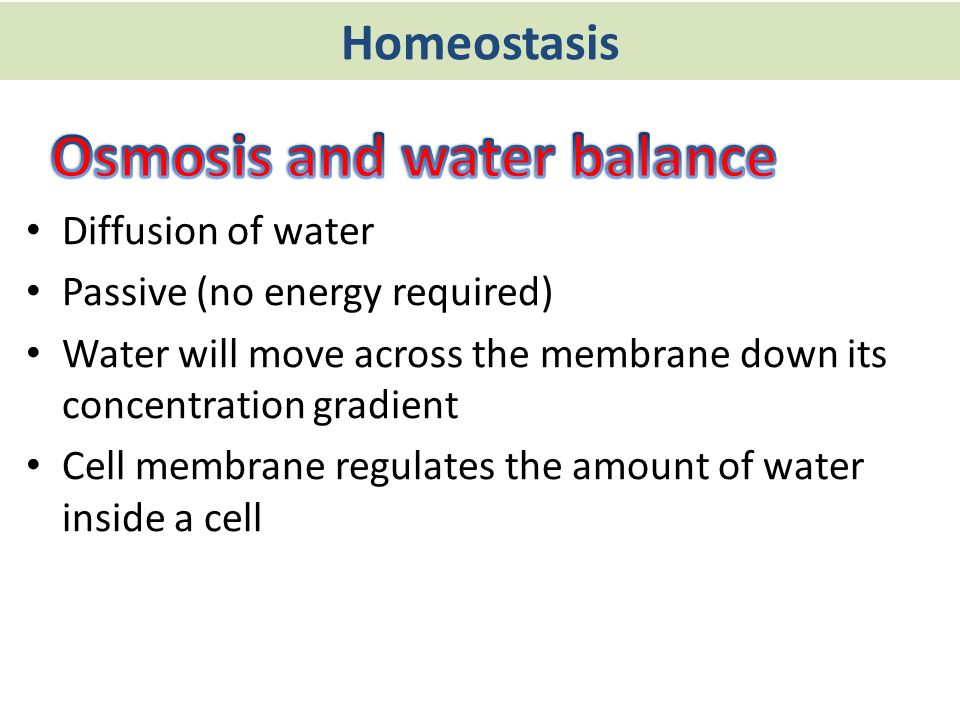 Osmosis and water balance